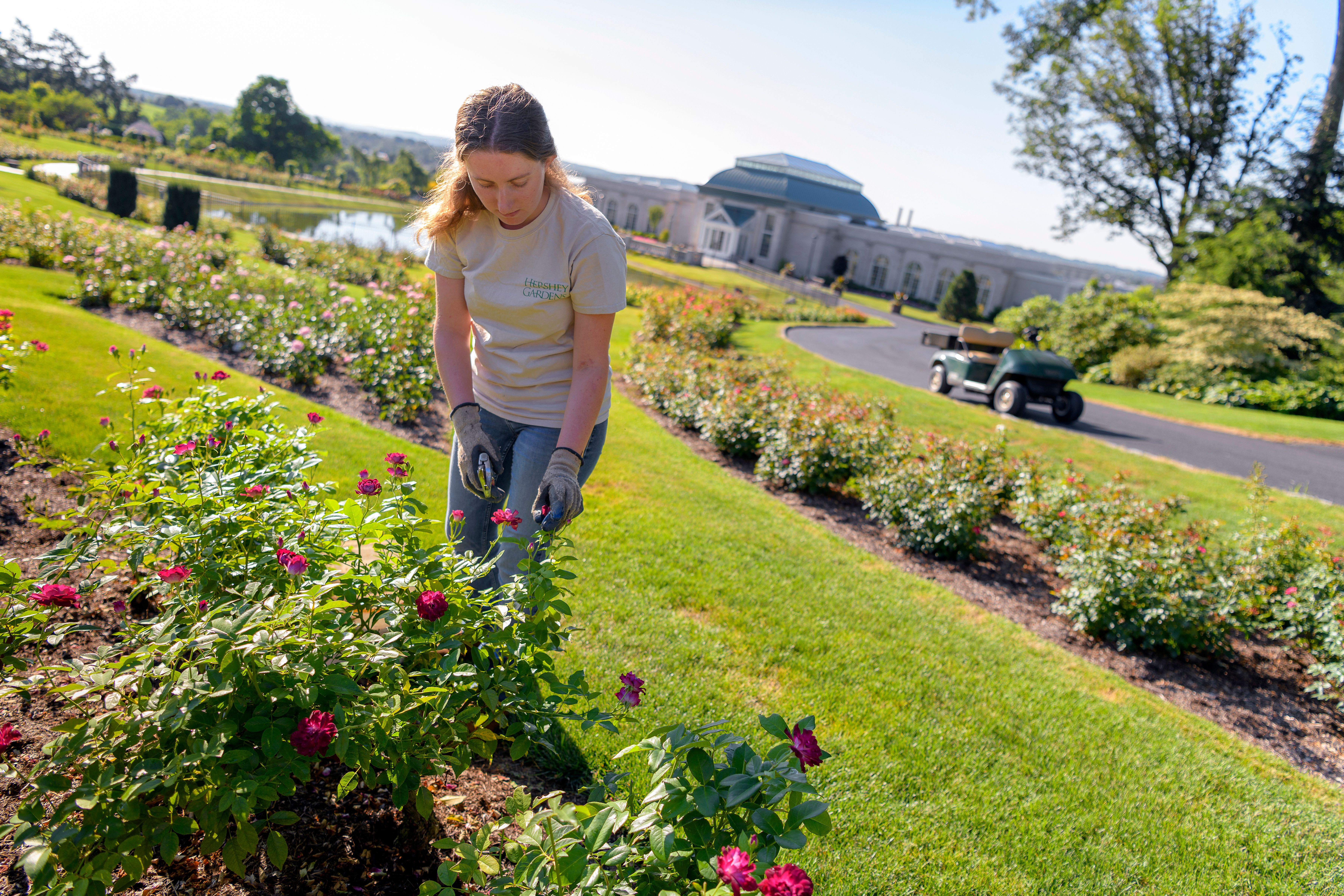 The Horticulture Industry S Age Problem Is Bigger Than You Think The Washington Post
