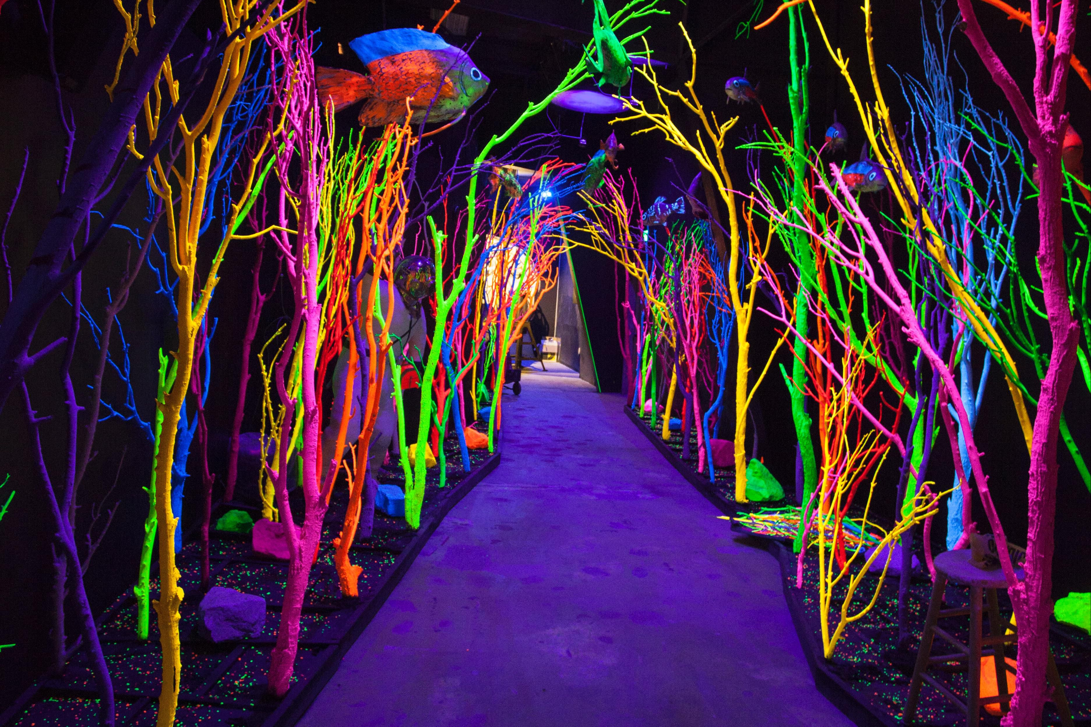Meow Wolf Is Coming To The Nation S Capital Wait Meow What The Washington Post