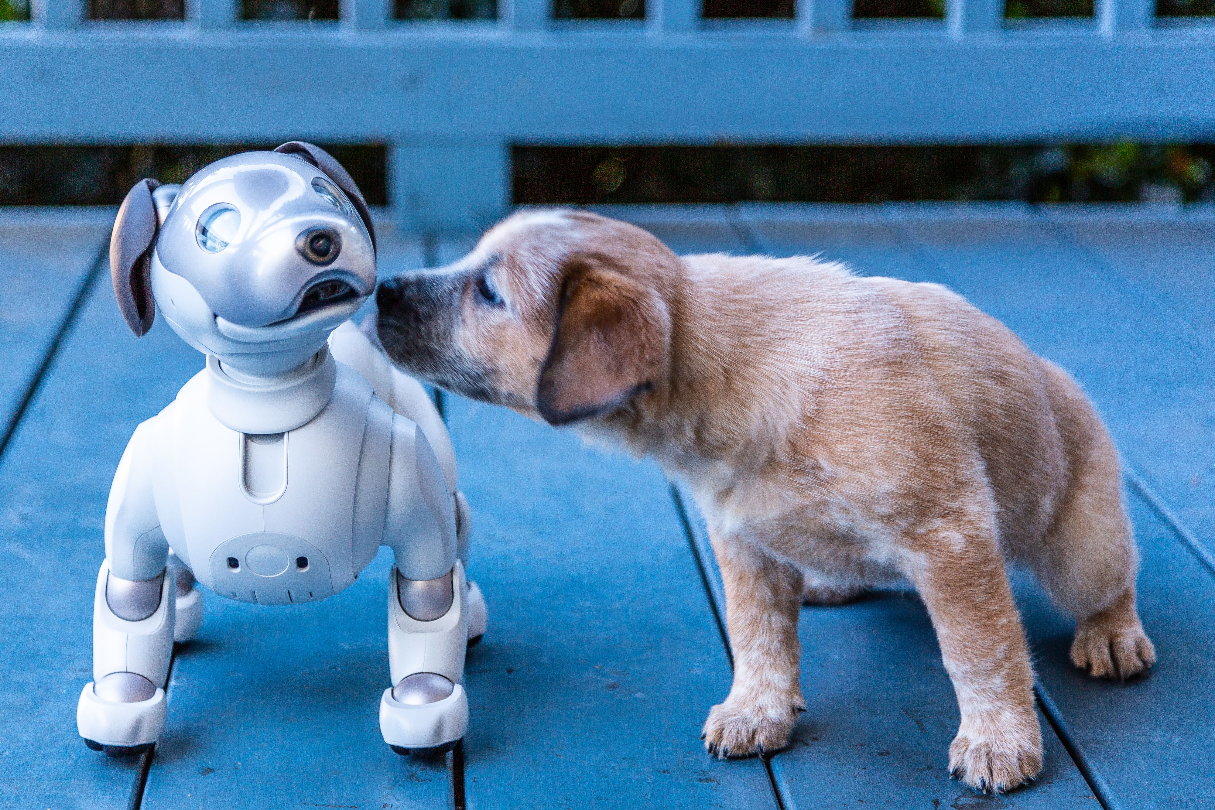Sonys Robot Dog Aibo Is Designed To Make You Feel Puppy